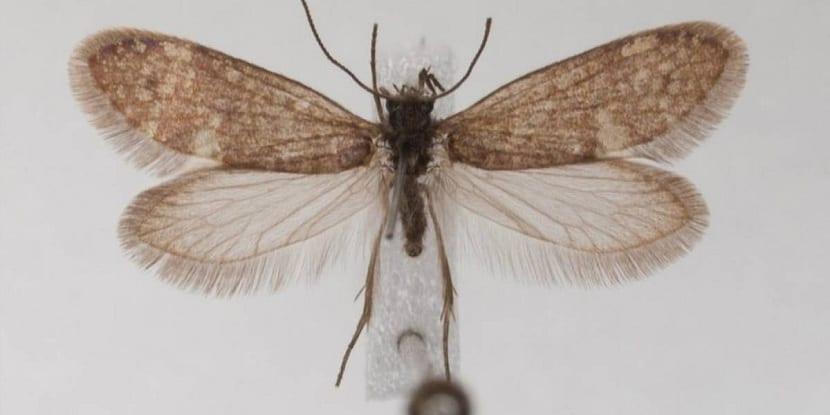 mariposas hace 200 años