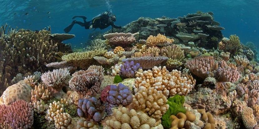scott reefs