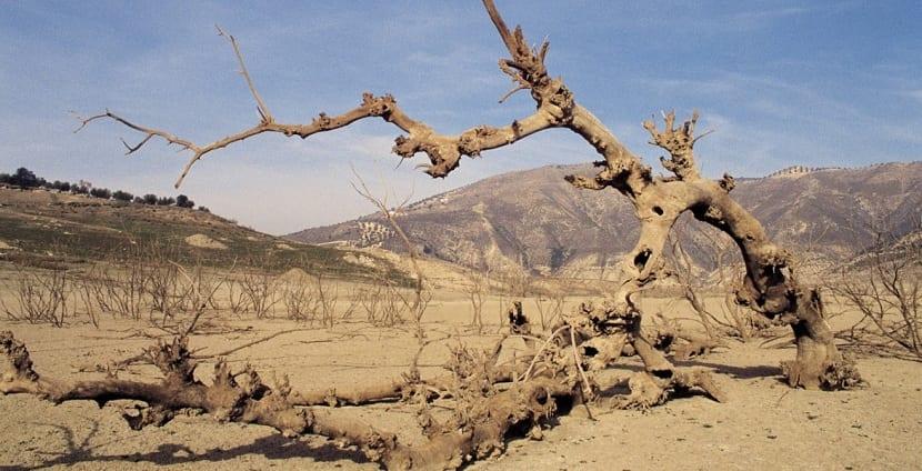 suelo empobrecido por el cambio climatico