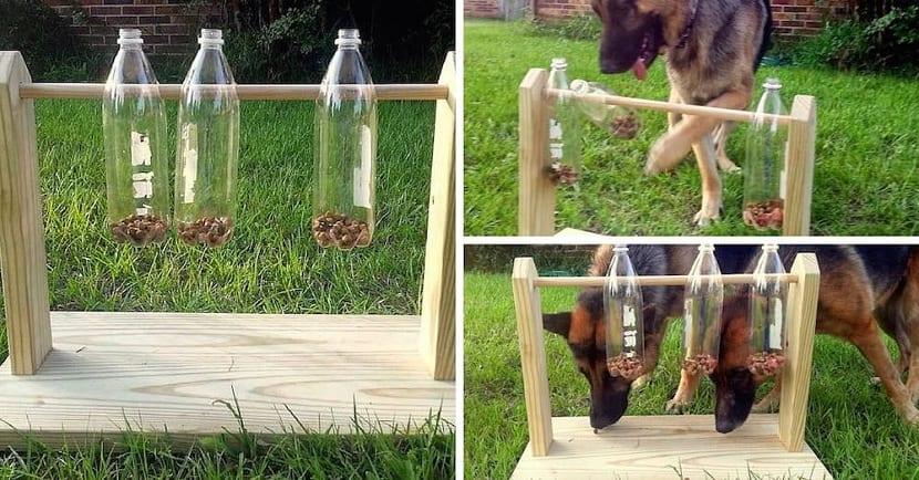 juego de botellas perros