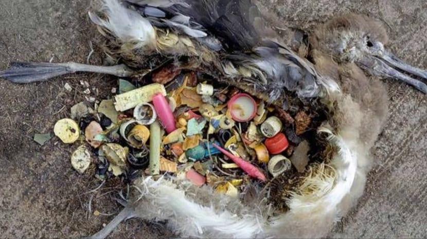 Consecuencia de las islas de plástico