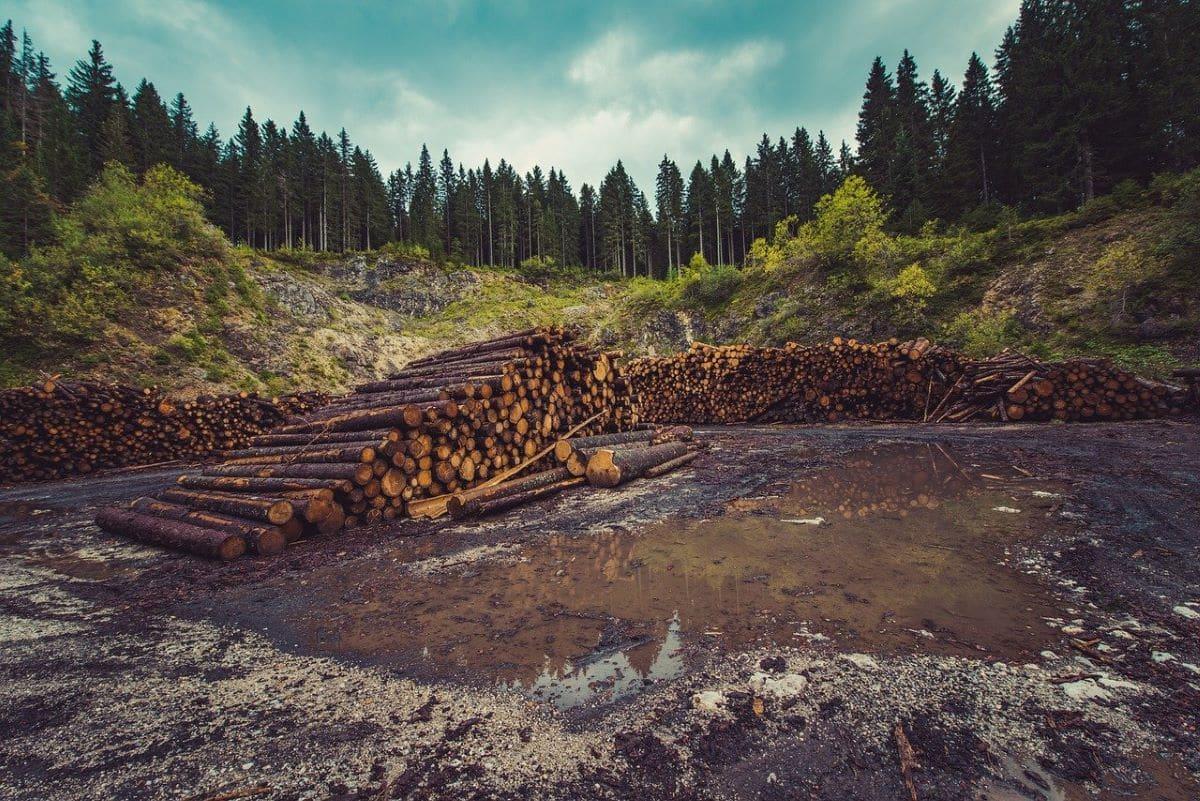 La deforestación pone en peligro la flora y la fauna