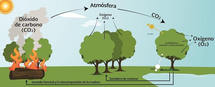 Balance de CO2