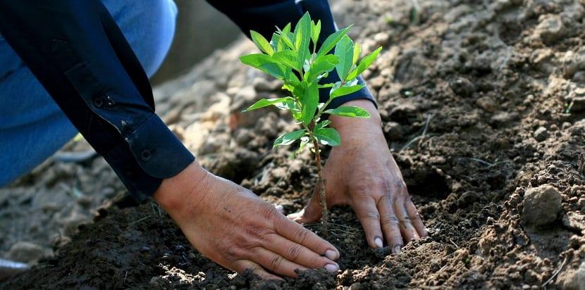 Características de la reforestación