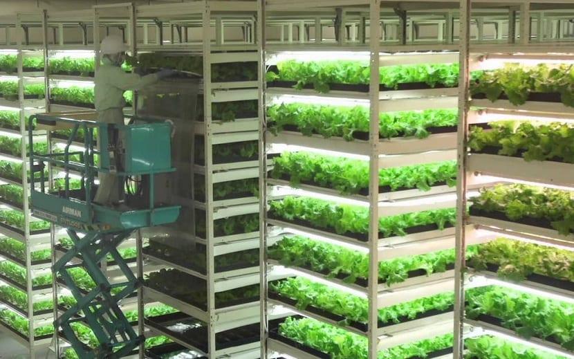 Cultivos verticales