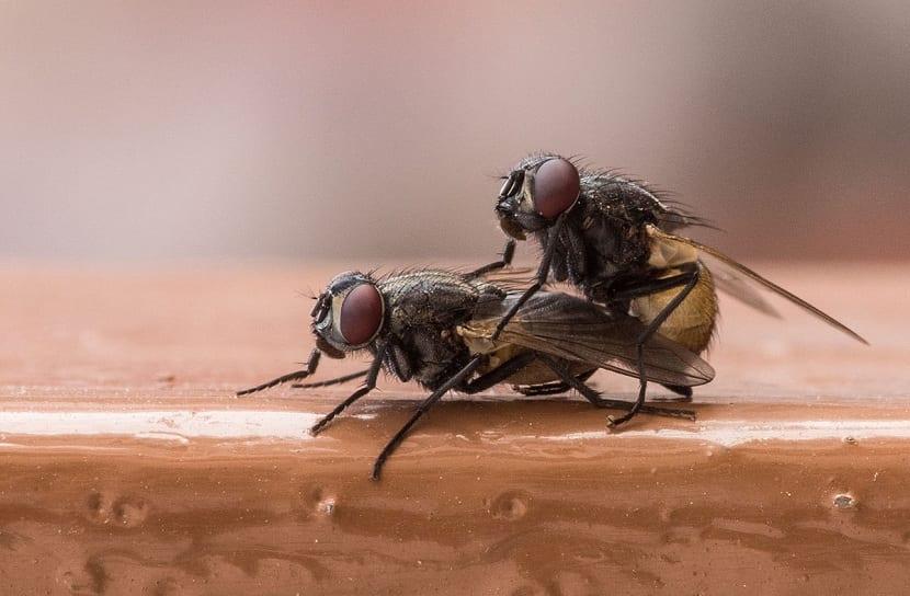 Importancia de las moscas
