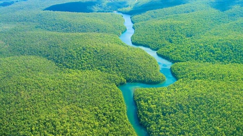 Recursos naturales biomasa