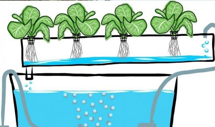Cómo funciona la hidroponia