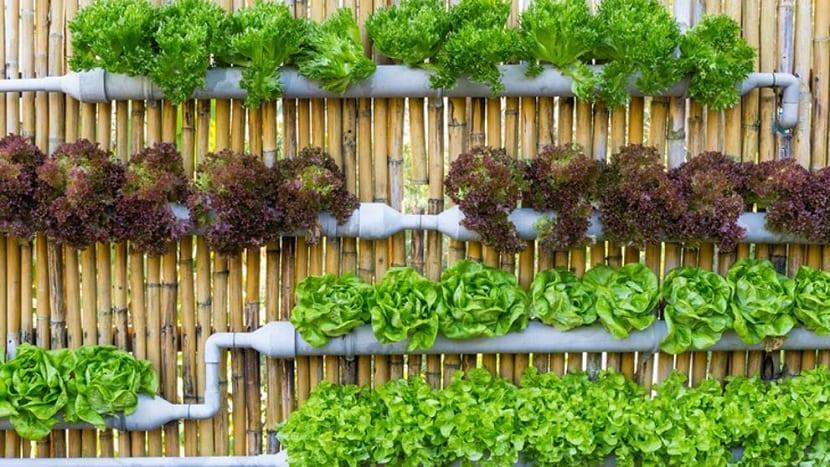 Como plantar en casa