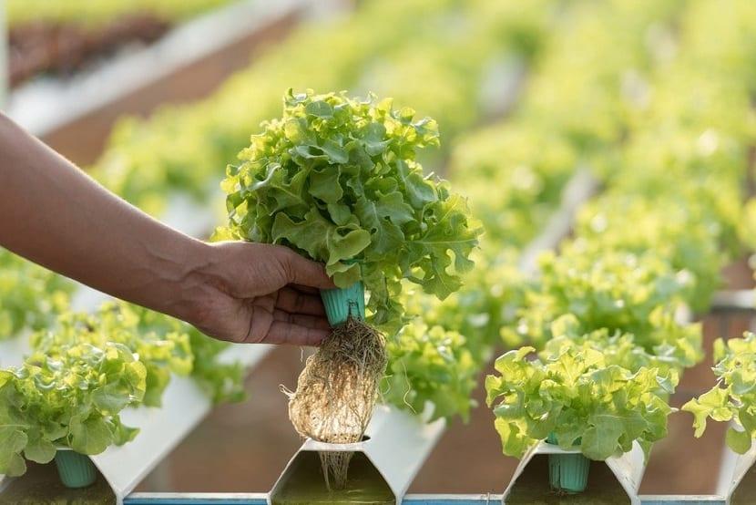 Cultivos en agua