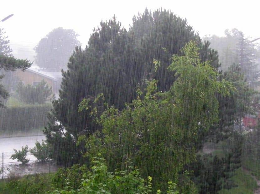 Daños de la lluvia ácida