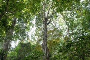 Ecosistemas y nicho ecologico