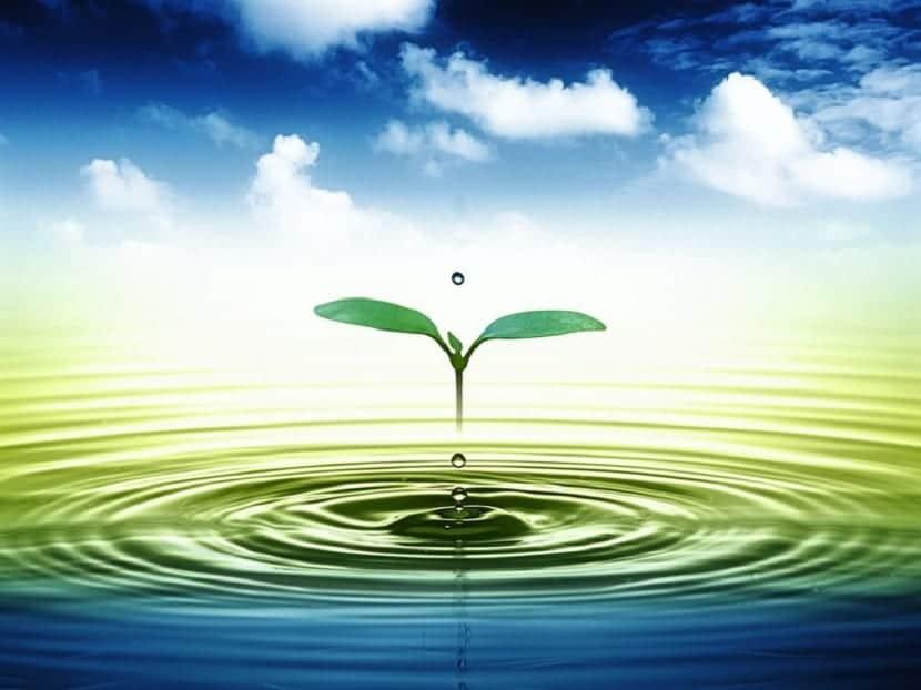 Importancia del agua para el