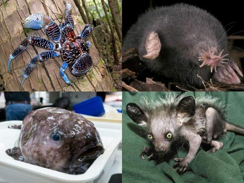 Otros animales mas feos