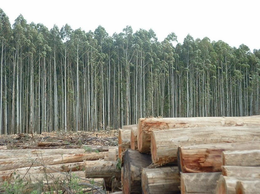 Tala de árboles para papel