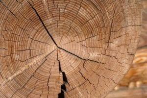 exraccion de la madera