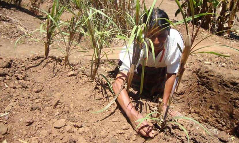 Afeccion a la agricultura