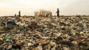 Ganaderia y contaminación del suelo