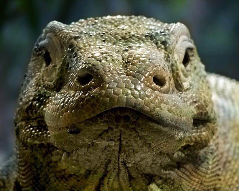 Reptil en peligro de extinción