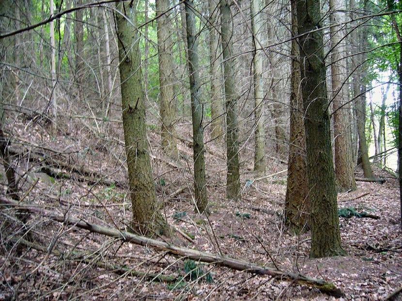 Bosques con explotacion forestal