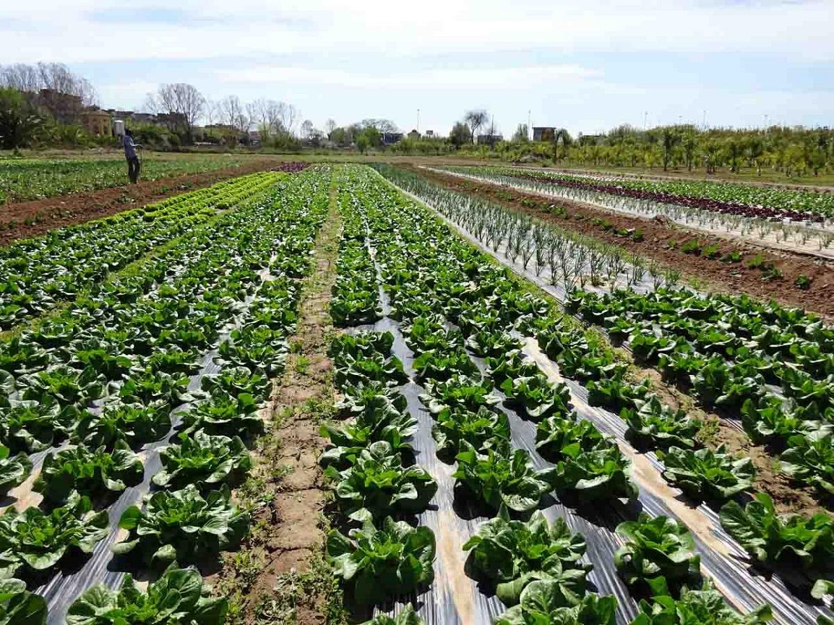 Contaminación química en agricultura