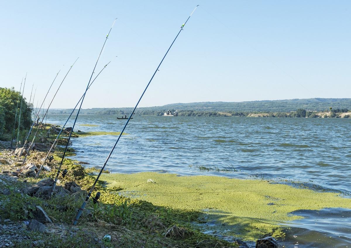 exceso de algas en agua