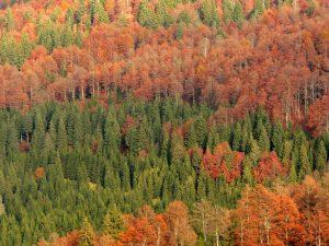 Bosque mixto del norte