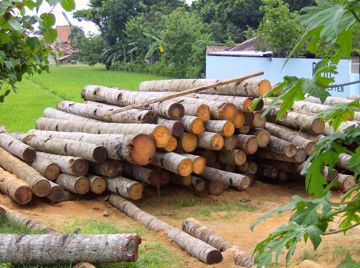 Importancia de la silvicultura