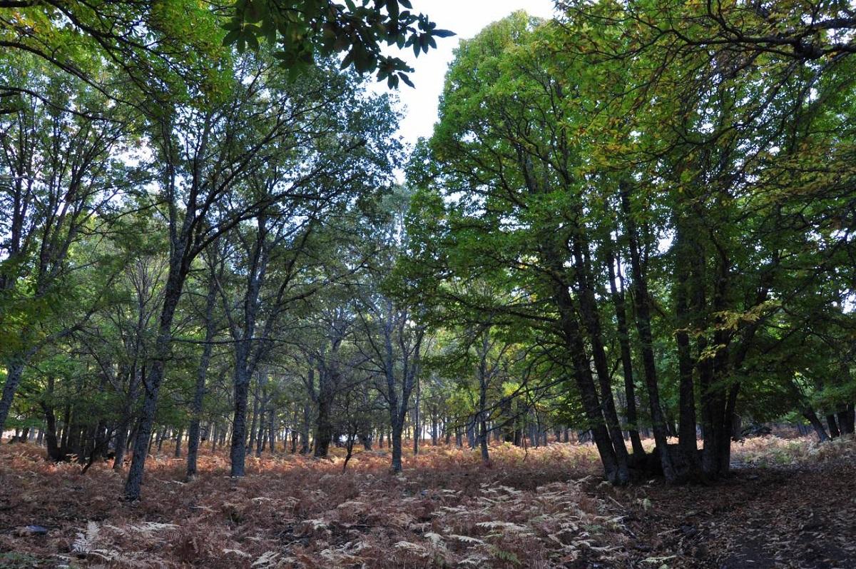 Tipos de bosque