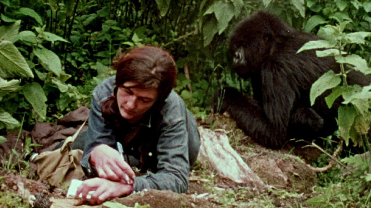 Vida de Dian Fossey