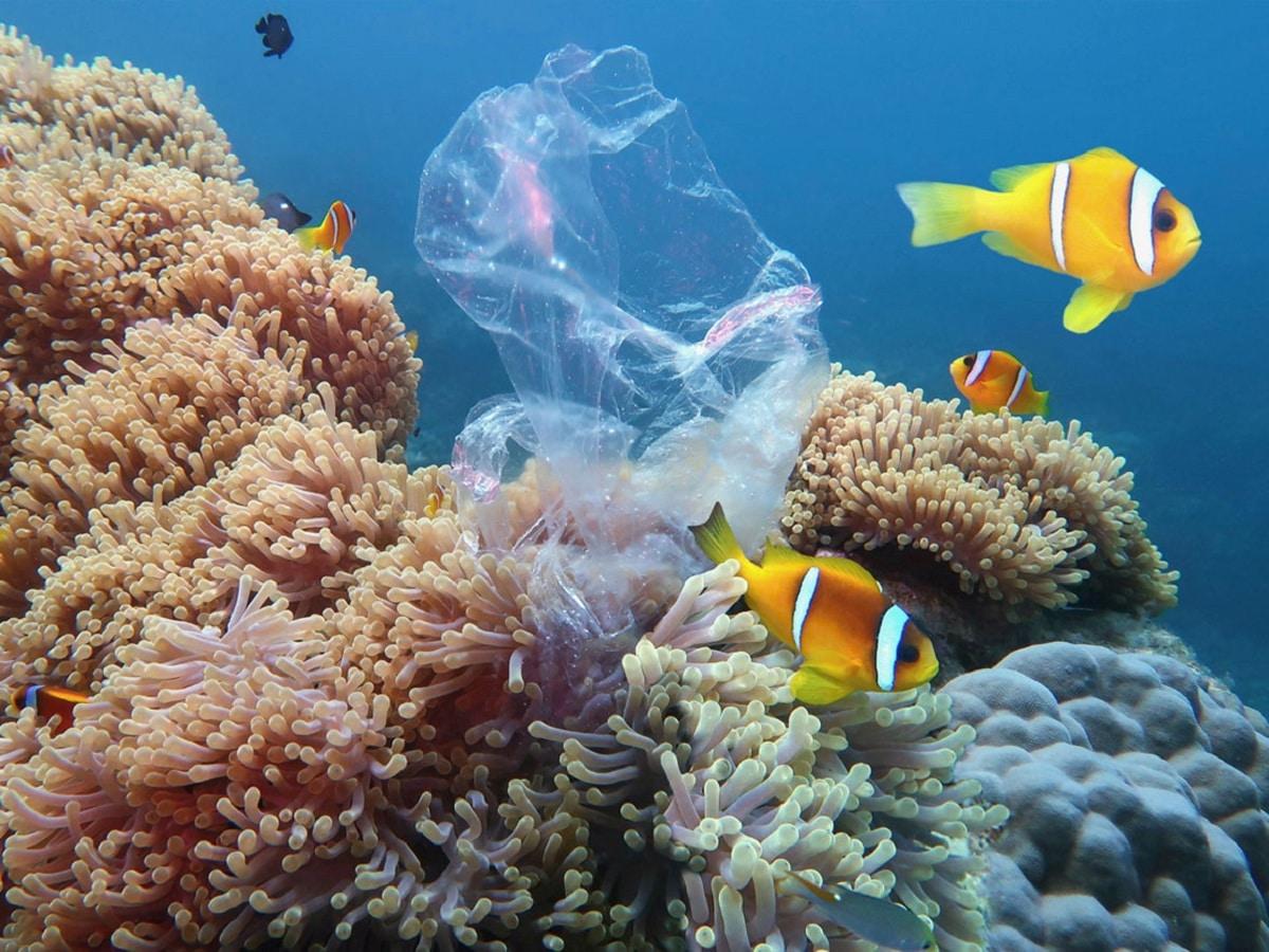 como llega el plastico al mar y consecuencias
