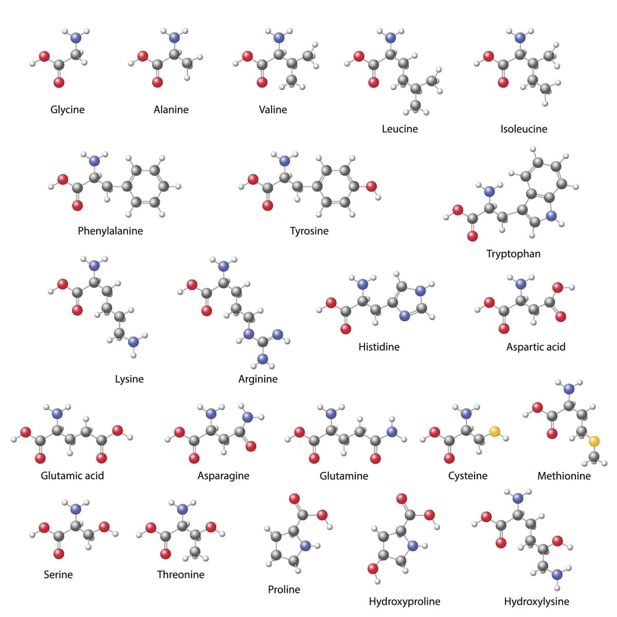 forma quimica de las proteinas