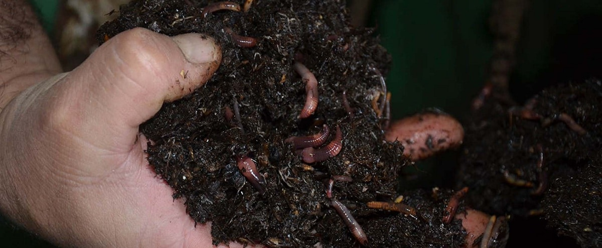 importancia de la vermicultura