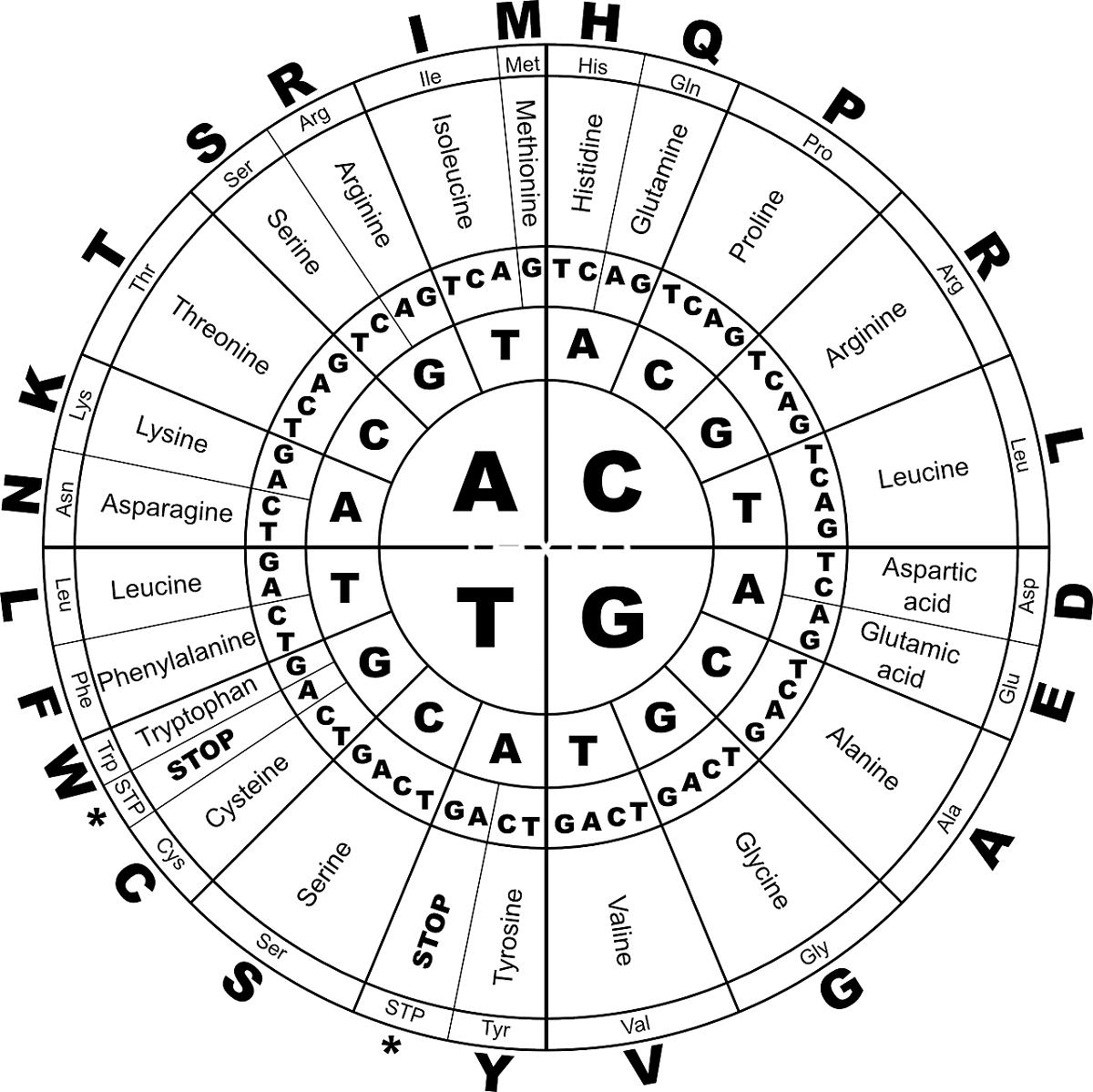 tabla de aminoacidos