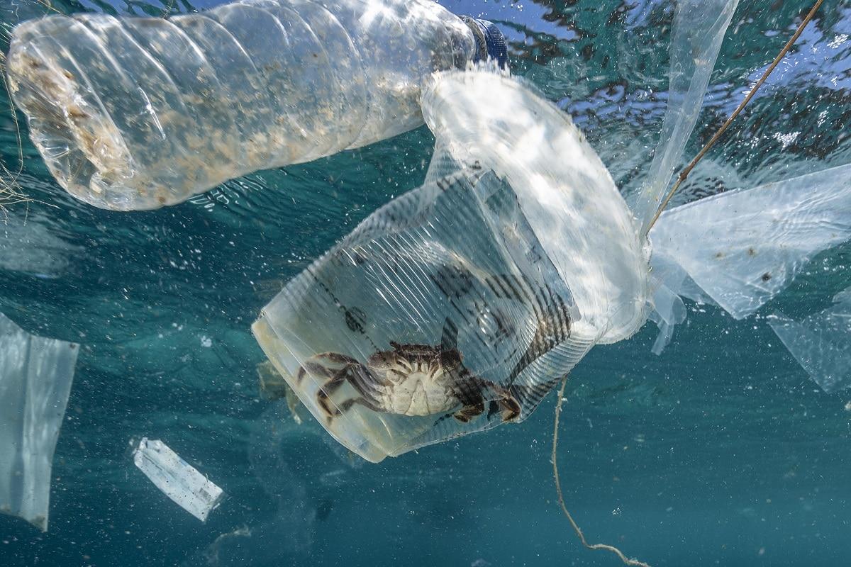 bolsas de plastico y contaminacion