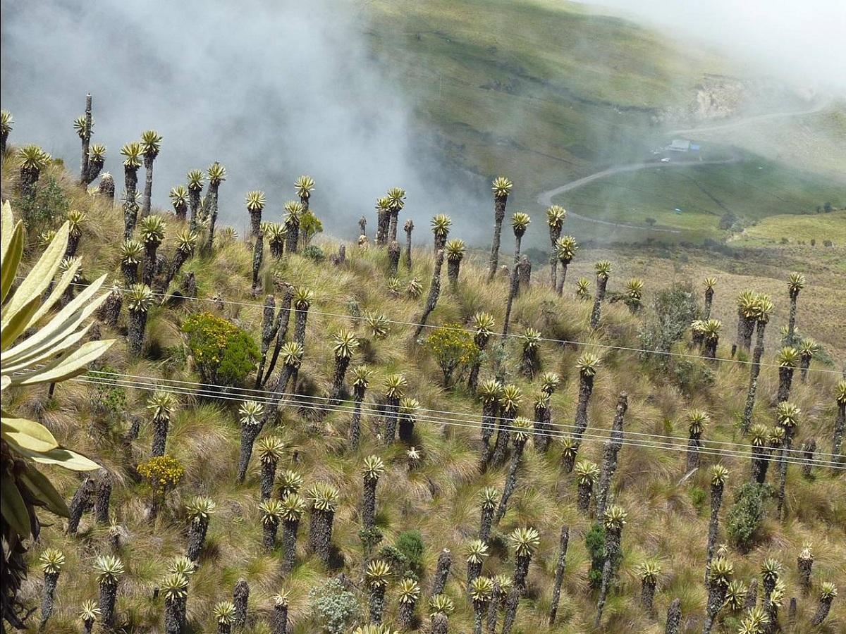 vegetacion paramuna