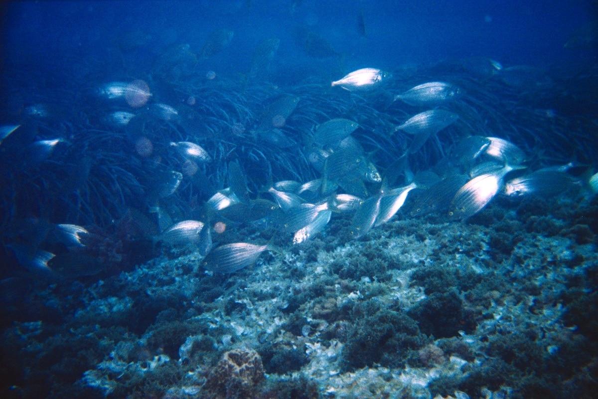 ecosistemas acuaticos