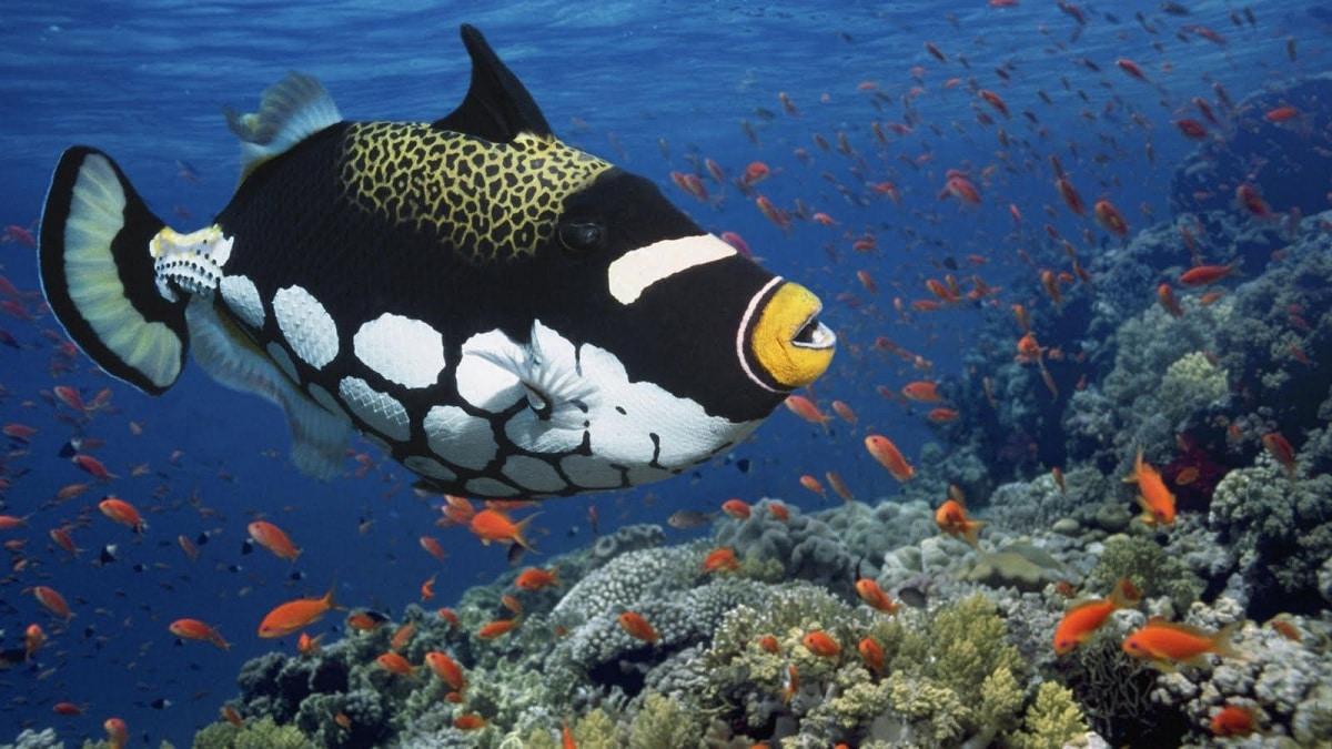 animales marinos y caracteristicas