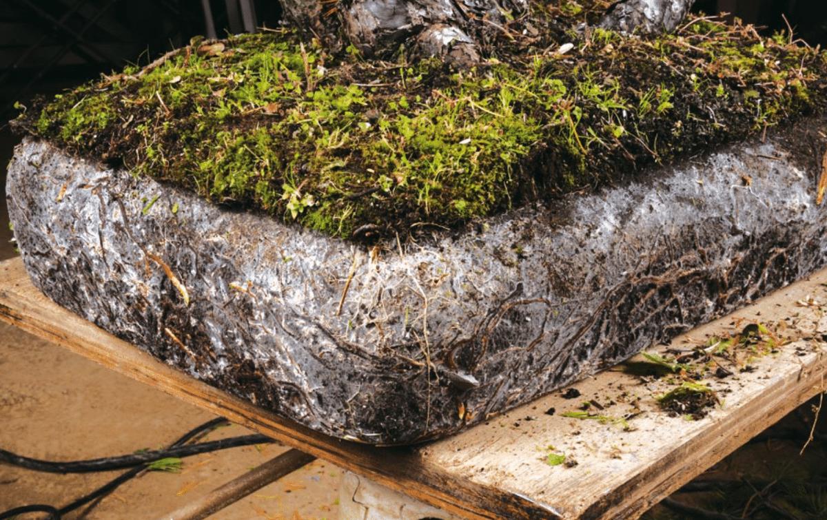 micorrizas plantas