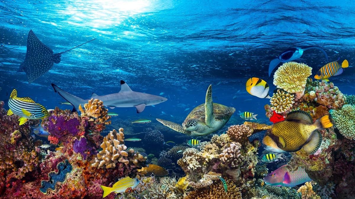 vida del oceano