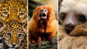 animales del Amazonas