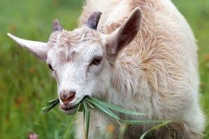animales que comen plantas