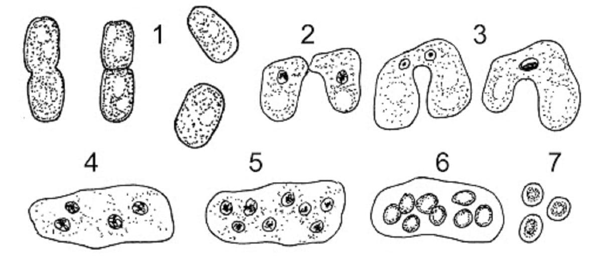 morfologia de los hongos