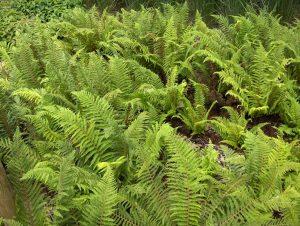 plantas criptogamas