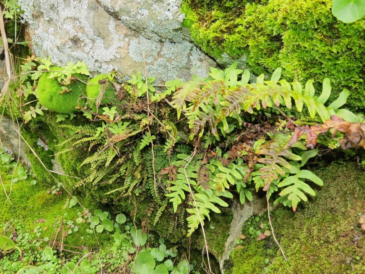 plantas inferiores