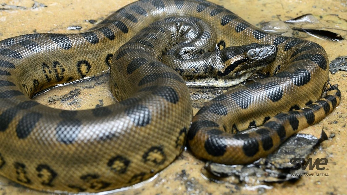 serpientes peligrosas