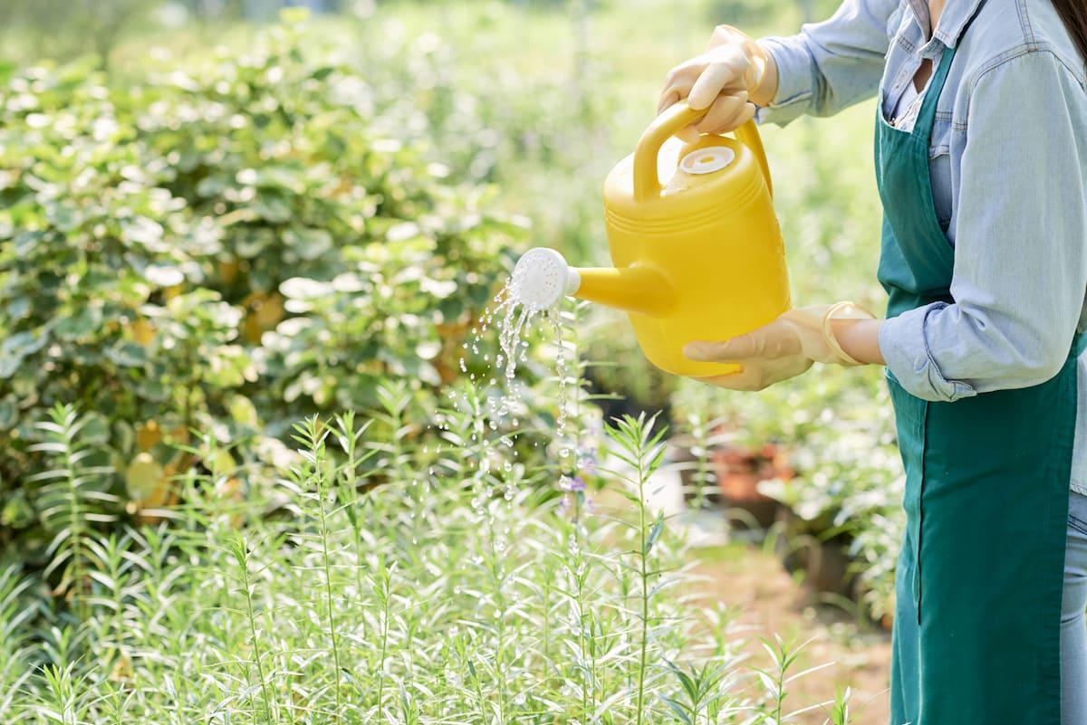 insecticidas para el huerto