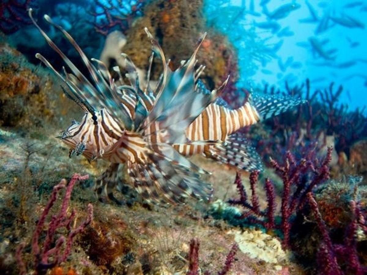 pesca y animales exotico