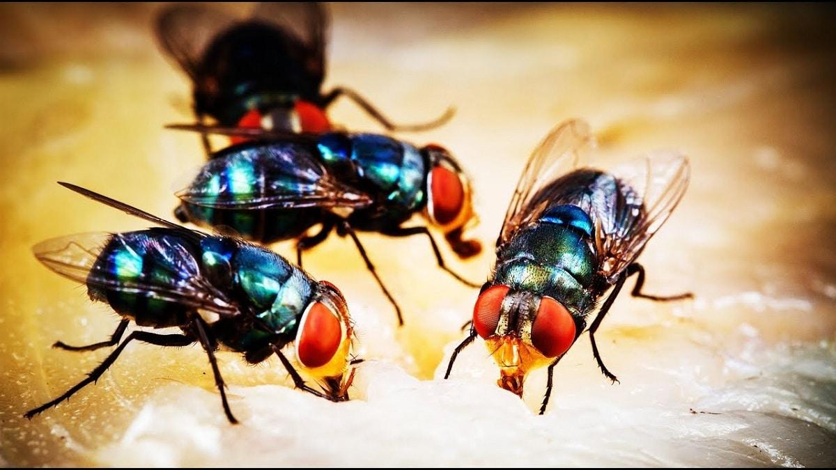 funcion de la mosca en los ecosistemas