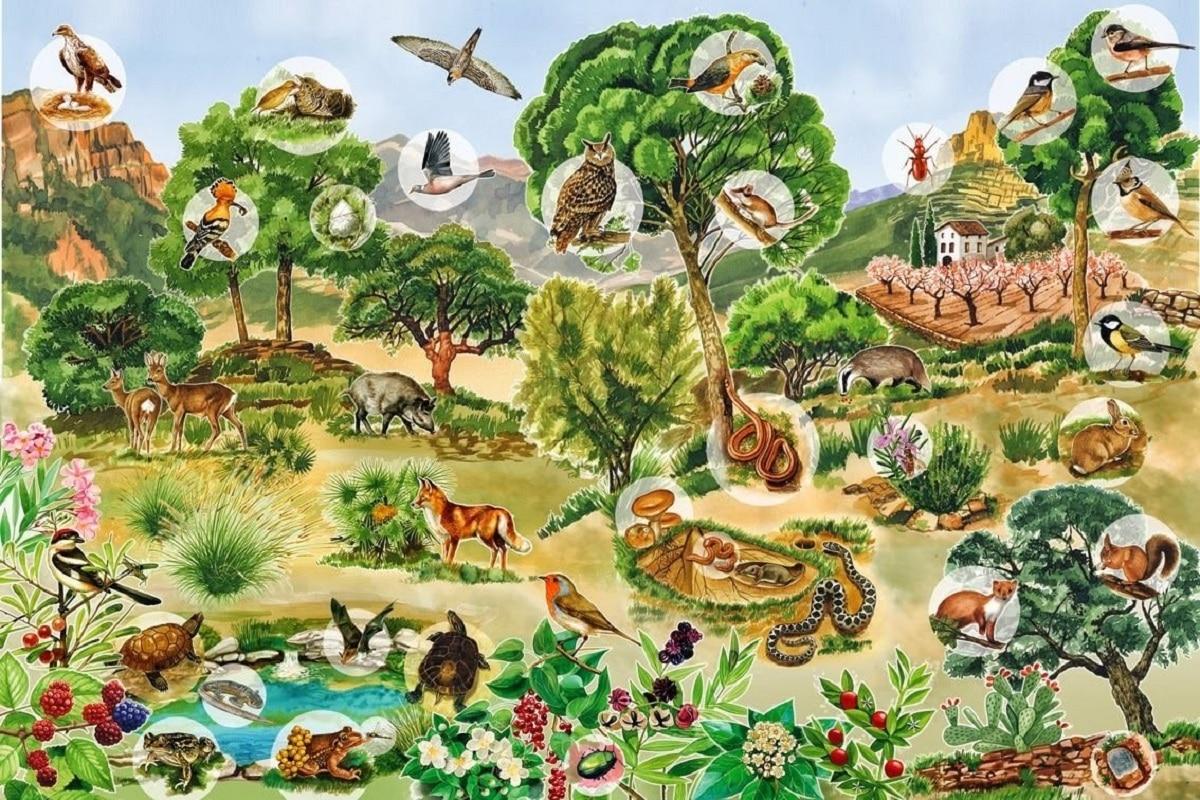 funciones vitales de los seres vivos ecosistemas